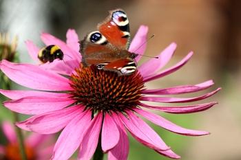 Bienenfreundlicher Garten, klein aber fein