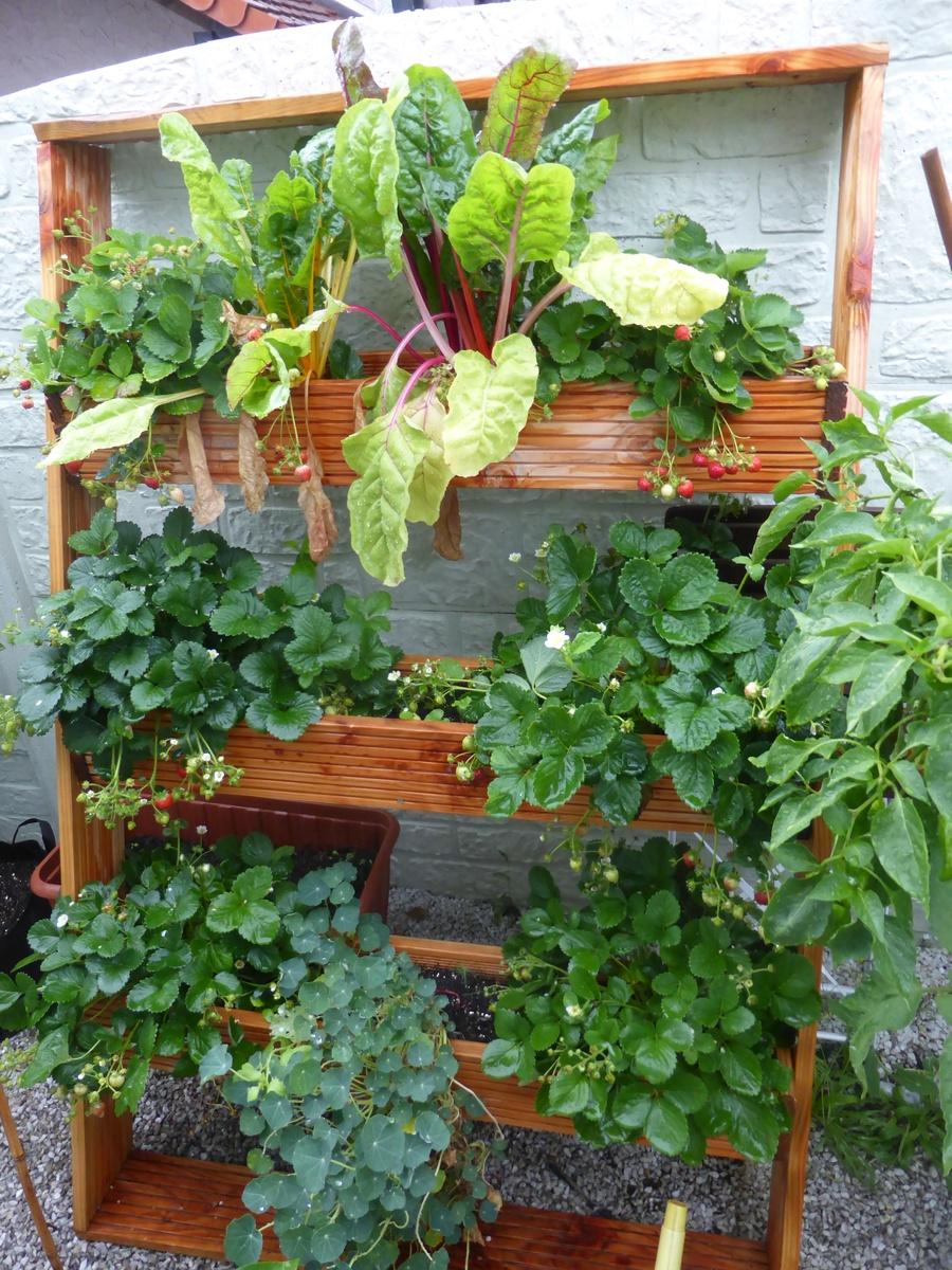 freudengarten pflanztreppe selber bauen f rs vertical gardening. Black Bedroom Furniture Sets. Home Design Ideas