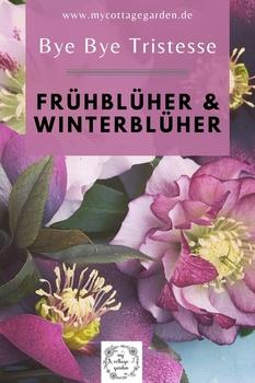 FRÜHBLÜHER UND WINTERBLÜHER - Byebye Tristesse