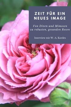 Von Diven und Mimosen zu robusten, gesunden Rose