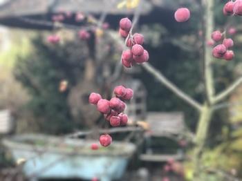 14 Ideen für einen zauberhaften Garten im grauen Winter