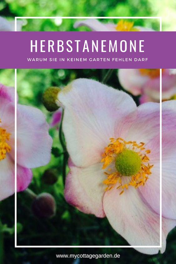 ODE AN DIE HERBSTANEMONE - 11 Gründe, warum sie in keinem Garten fehlen dar