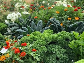 Dein eigener kleiner Bauerngarten!