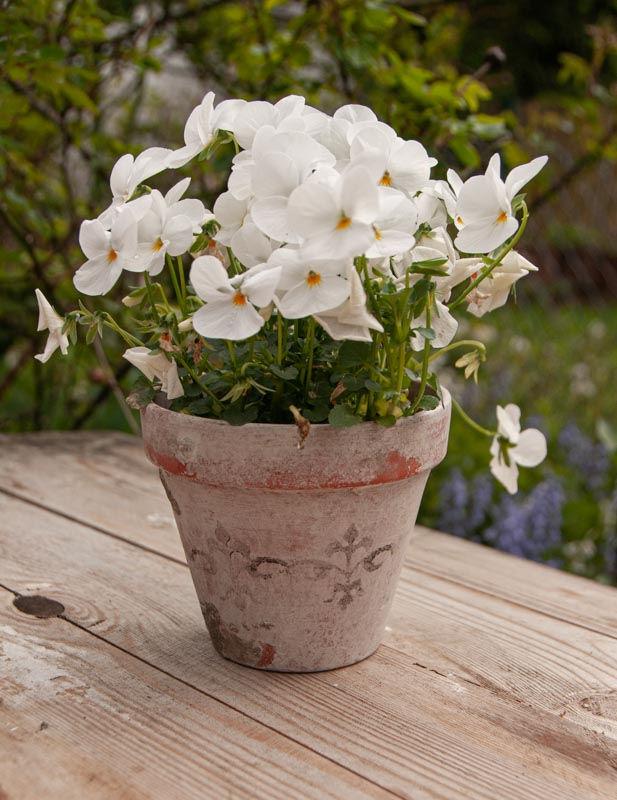Blumentöpfe altern - Terracotta mit selbstgemachter Patina