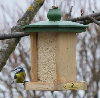 Vogelfütterung – Wie man Wildvögel sinnvoll unterstützen kann