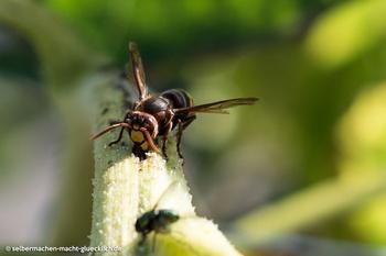 Wissenswertes über Wespen