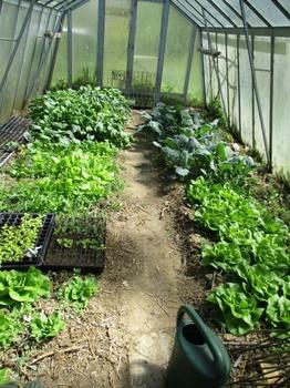 Samenfestes Gemüse vs. F1 Hybriden