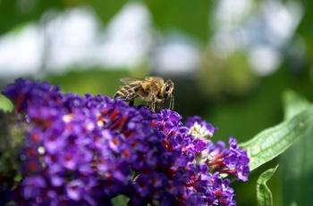 Insektenfreundliches Gärtnern