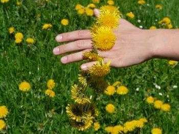 Kräuter für schöne Hände