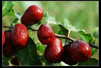 Jujuben: Power-Frucht für Haut und Haare