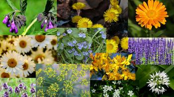 Essbare Blüten - eine bunte und gesunde Vielfalt!