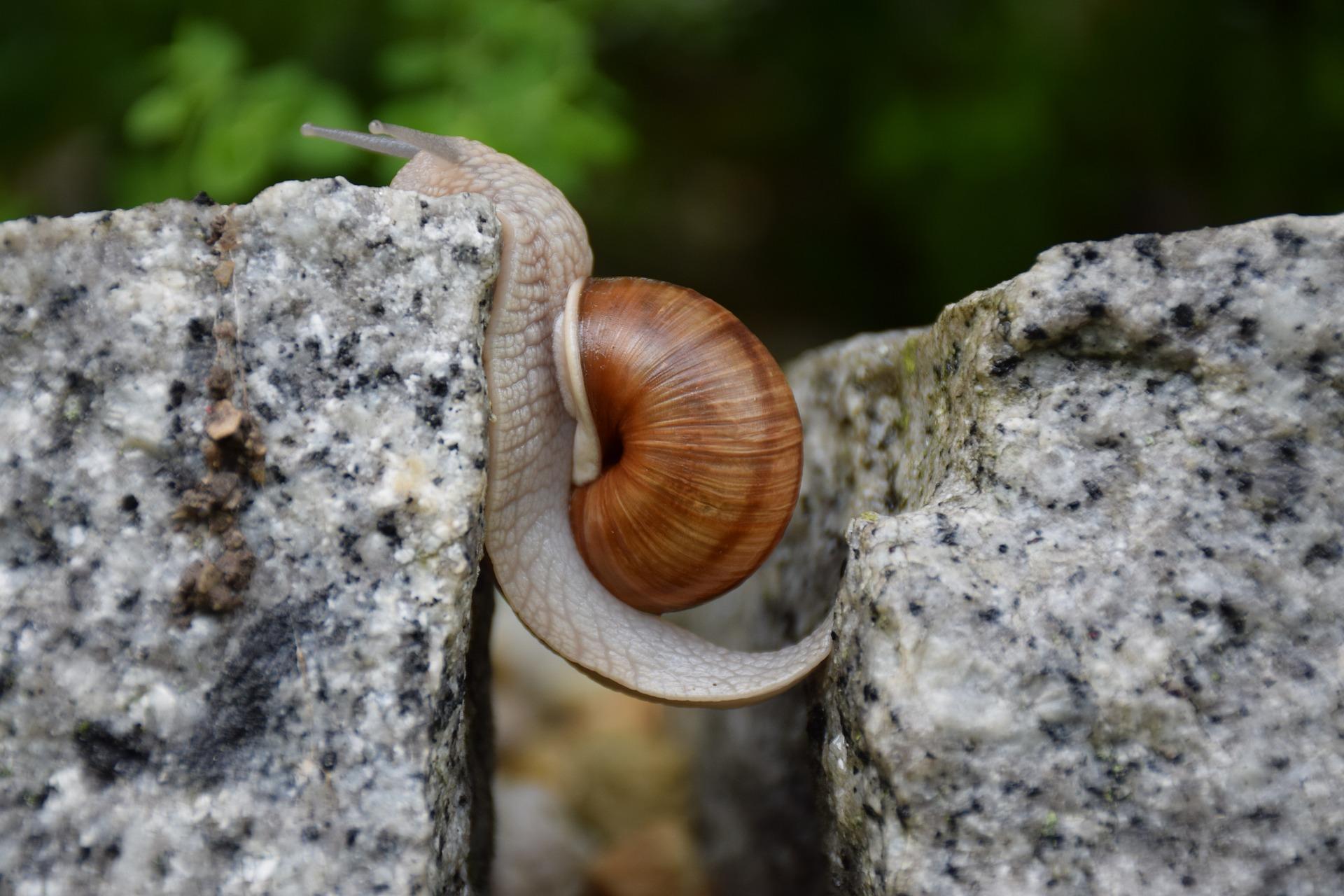 Schneckenalarm im Garten - Alles, was Du wissen musst