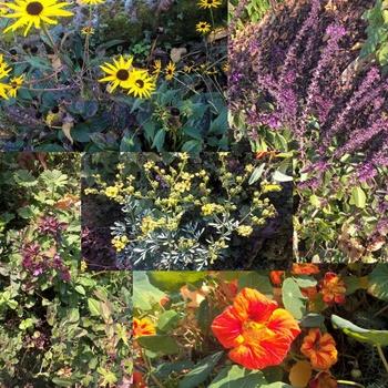 Pflanzen für Bienen, Schmetterlinge & Co - eine Übersicht