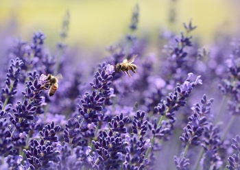 Insektensterben - Was Du tun kannst