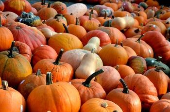 Herbstgemüse Kürbis - Diese Sorten gibt es und so kannst Du sie verwenden!