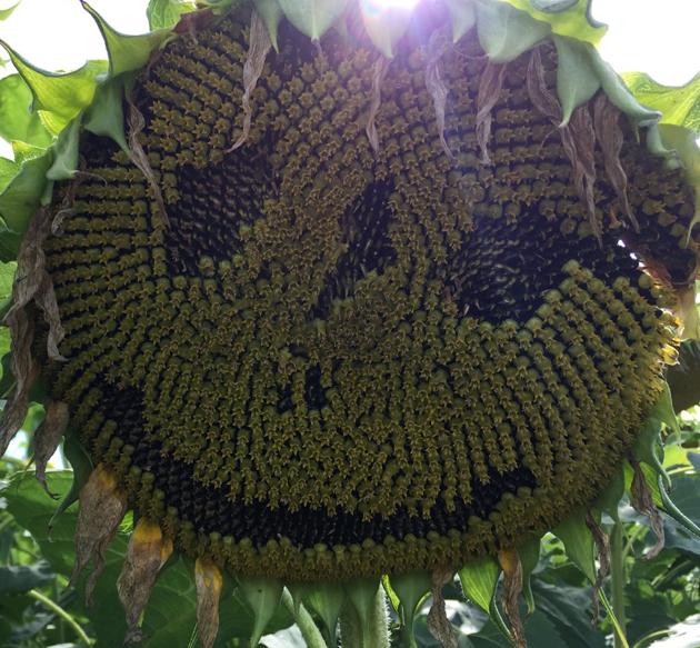Die Sonne lacht!