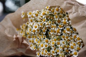 Frühlingsgrüße vom Blumenmarkt