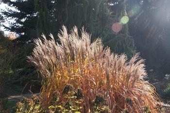 Gräser im Herbstlicht
