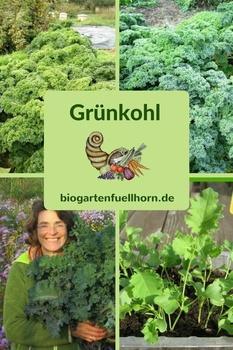 Grünkohlernte im Biogarten