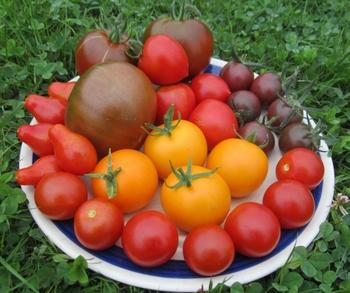 Kleiner Tomatenteller aus dem Biogarten