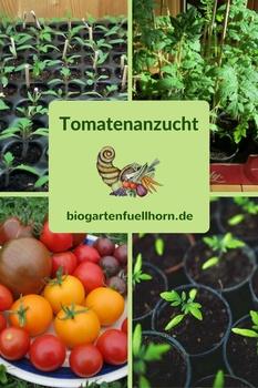 Tomatenanzucht