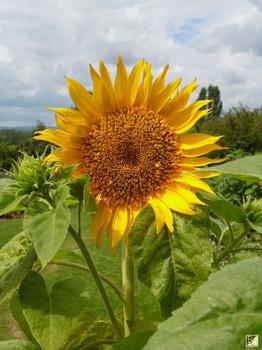 Naturgartenspecial auf Botanik Guide