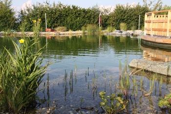Teich - Frühjahrsputz