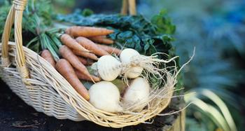 Gemüse richtig einwintern