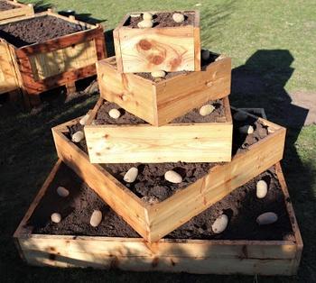 Eine Kartoffelpyramide/Gemüsepyramide bauen
