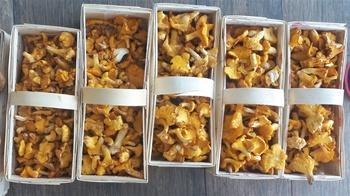 Eierschwammerlgulasch/Gulasch aus Pfifferlingen