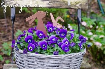 Gartenimpressionen im Frühling