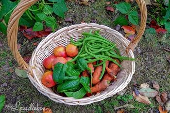 Lohnt sich ein Gemüsegarten überhaupt?