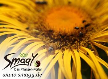 Smagy - Das Pflanzen-Portal zum Mitmachen