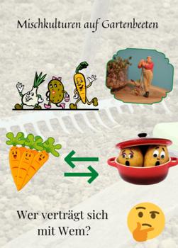 Gemüse – Mischkulturen - Die Bedingungen für eine gute Ernte