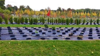 Dreihundert Jahre alt: Die Späth'sche Baumschule in Treptow