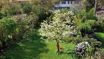 Bäume in einem kleinen Stadtgarten!