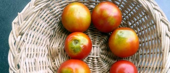 Tomaten im Überfluss