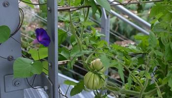 Blumengarten oder Nutzgarten?