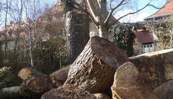 Keine großen Bäume in einem kleinen Stadtgarten!