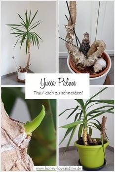Yucca Palme schneiden