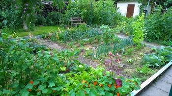 Mischkultur im ländlichen Gemüsegarten