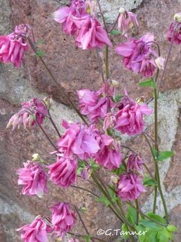 Trotz des vielen Regens - ein Blütenreigen in unserem Maigarten