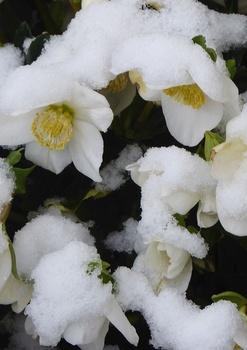 Seltene Anblicke – unser Garten im Schnee