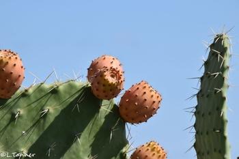 Bekannte und unbekannte Pflanzen in Sardinien