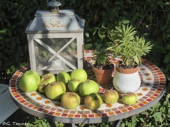 wohin mit den vielen Äpfeln im Garten - einfaches Rezept für Apfelmus