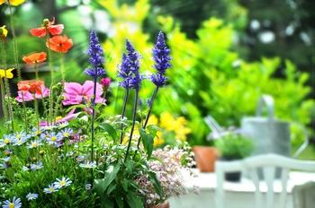 Fitmacher für Balkonpflanzen