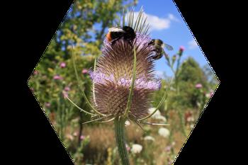 So blüht Bienen was