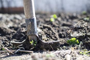 Boden verbessern im Gemüse- und Staudenbeet