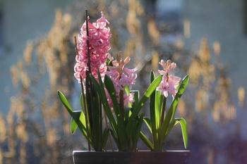 Ein anderer Frühling