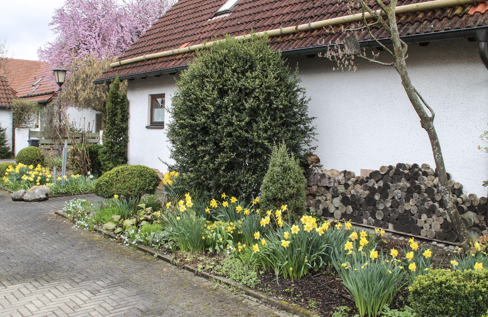 Schattenbeet im Frühling